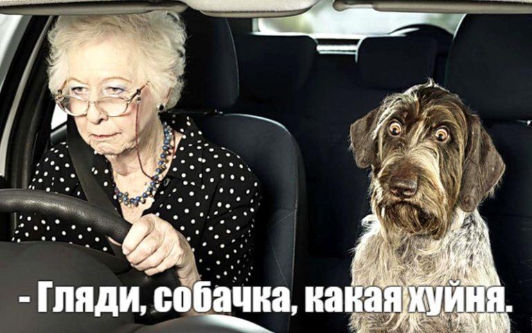 — Гляди, собачка, какая х-ня