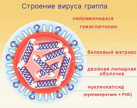 #РОЙТВ Михаил Делягин: Тактика власти после вируса