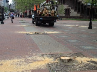 The Stumps of Dying Trees in Copley Square