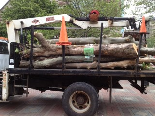 Removed Trees on a Flatbed Truck in Copley Square