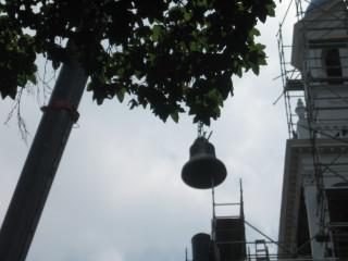 Lenten Bell Photo #2