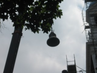 Lenten Bell Photo #3