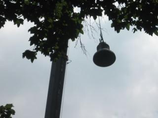 Lenten Bell Photo #4