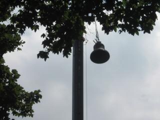 Lenten Bell Photo #5