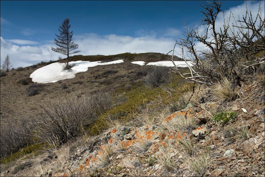 Курайская степь, Горный Алтай