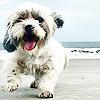 stock_puppy