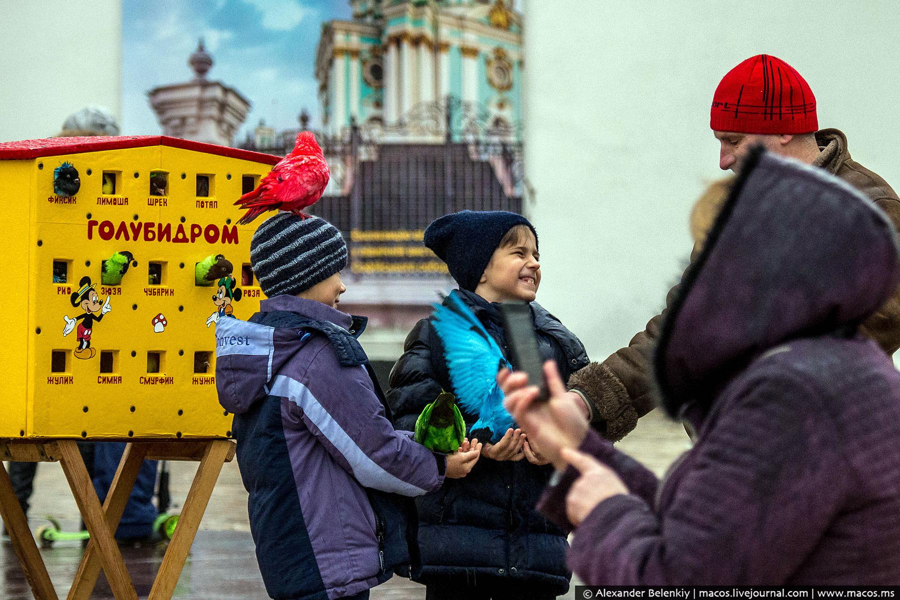 Голубидром в центре Киева: аттракцион для извращенцев