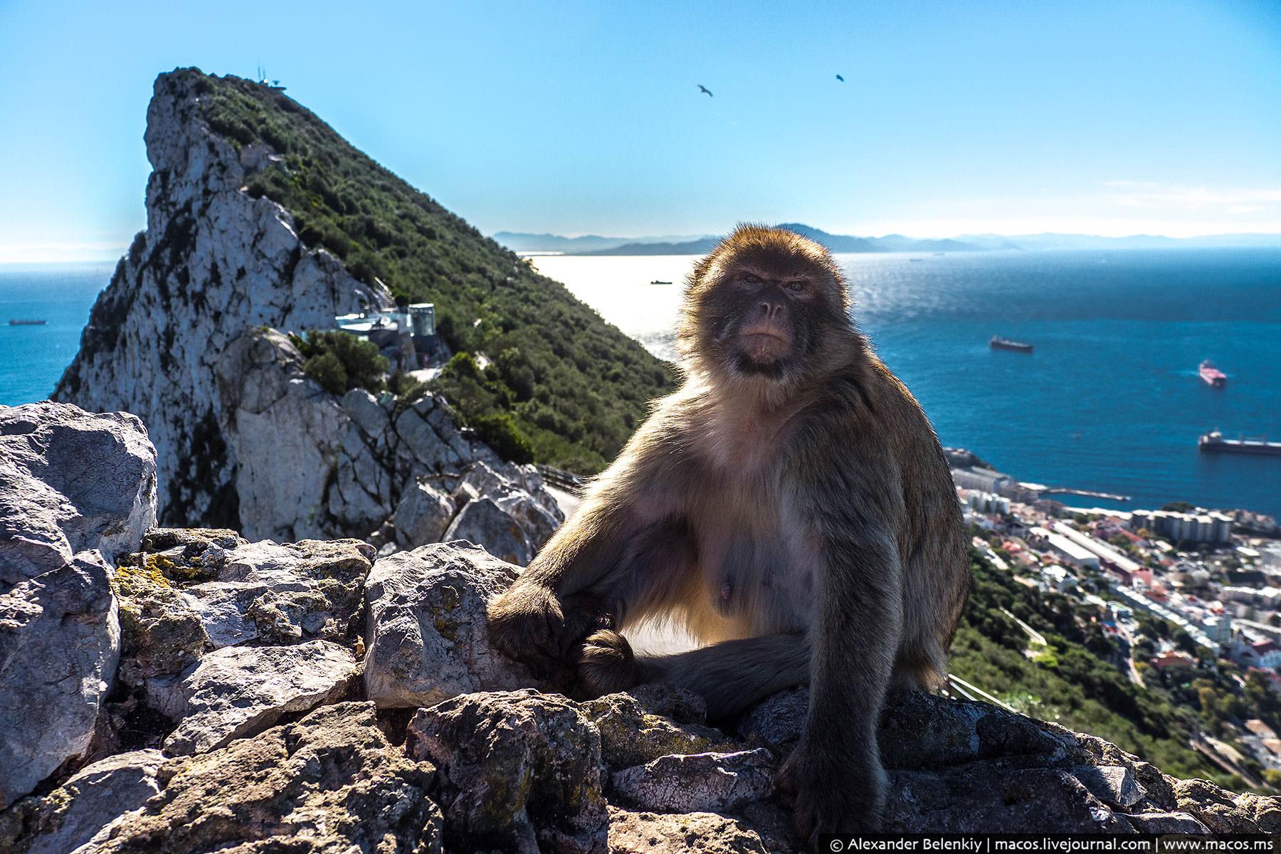 Гибралтар: Британия на дальних берегах