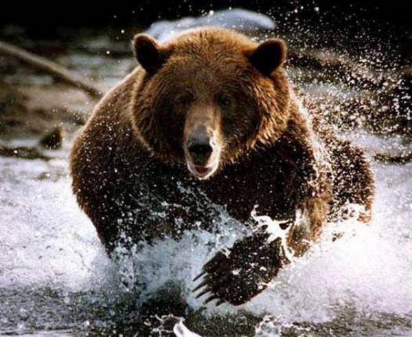 Медведь прыгнул