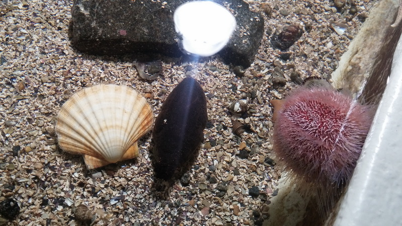 Океанариум Алесунд