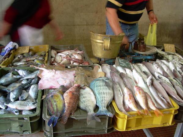 339402-Fish-market-in-Zadar-0