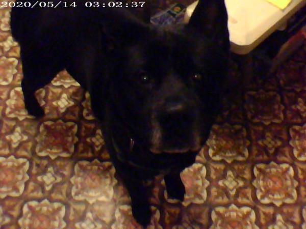 FIRST DOG 001.JPG