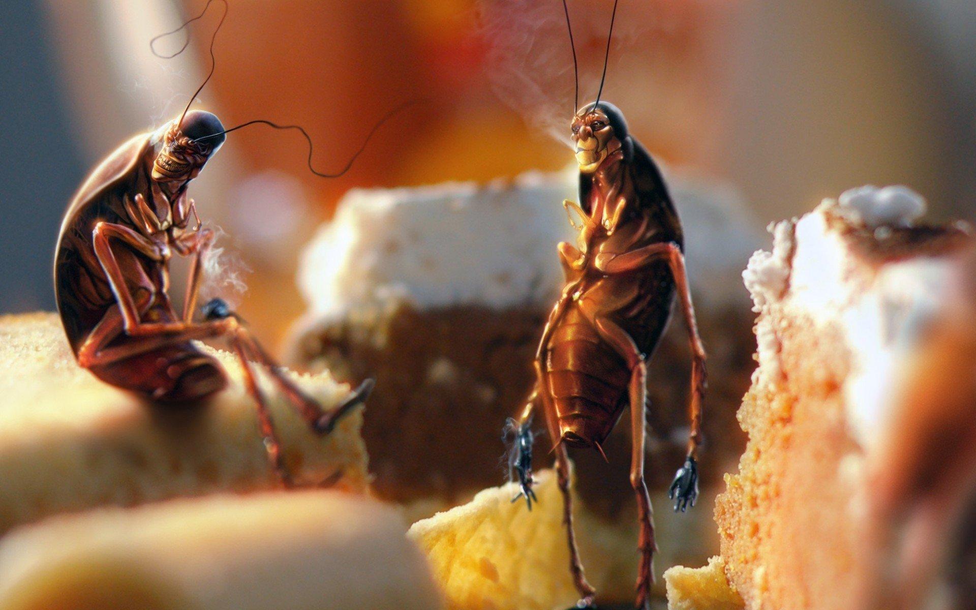 Помогает ли борная кислота от тараканов