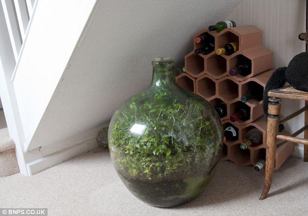 Как сделать замкнутую экосистему в бутылке самому?
