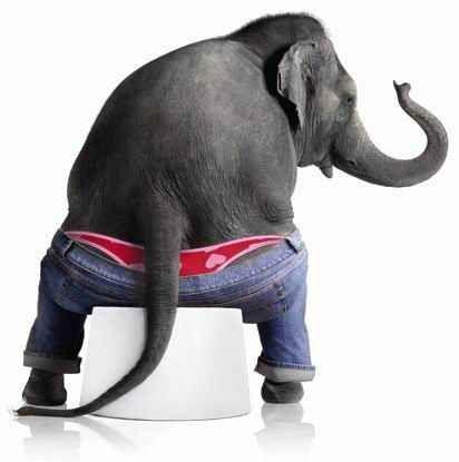 slonovij-navoz