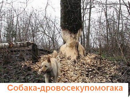 собака улыбака 1