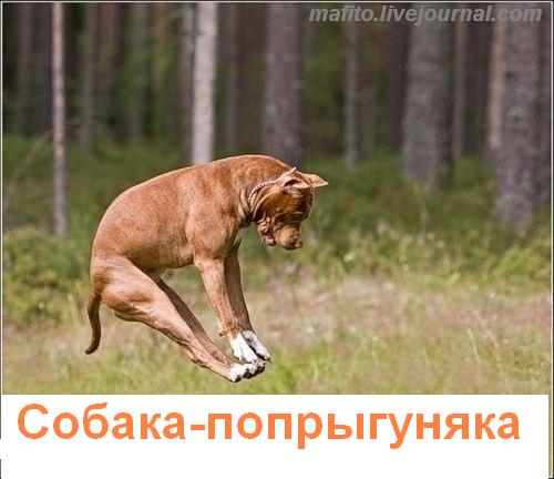 собака улыбака 1 (1)