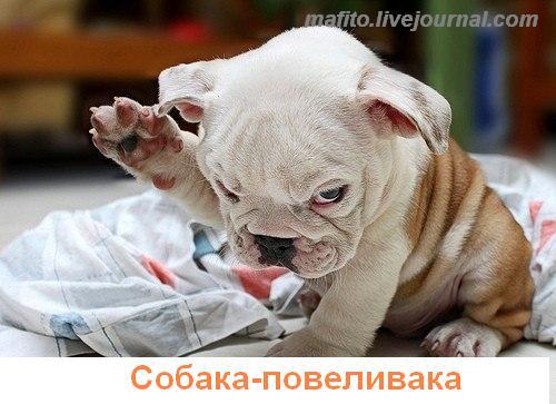собака улыбака 1 (2)