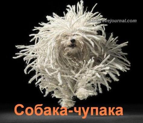 собака улыбака 1 (3)