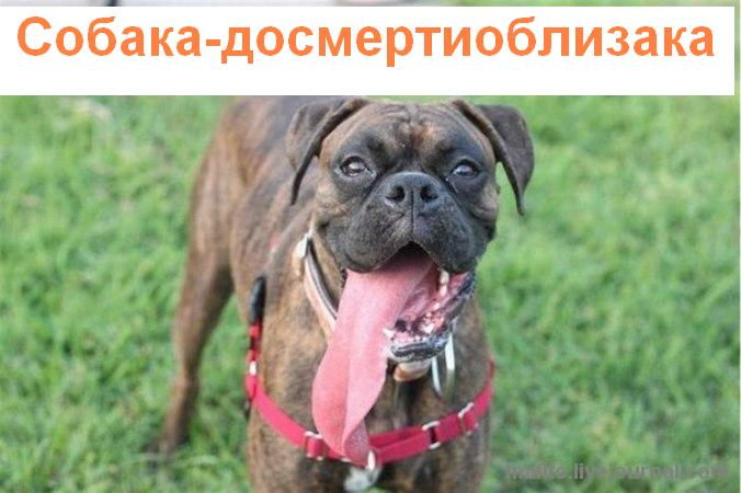 собака улыбака 1 (4)