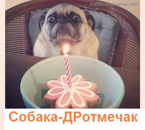 собака улыбака 1 (5)