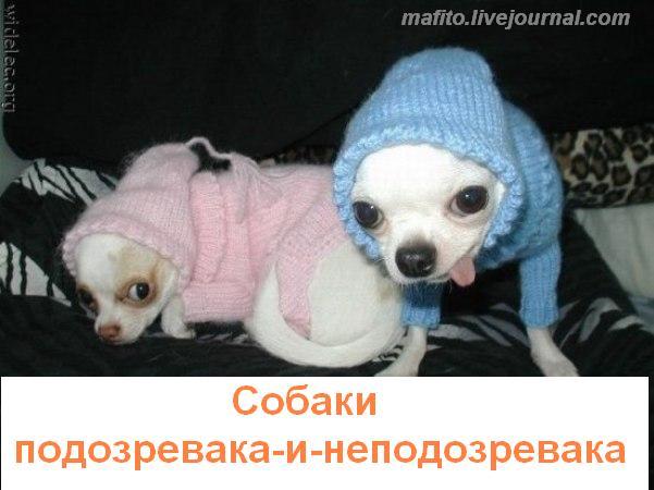 собака улыбака 1 (7)