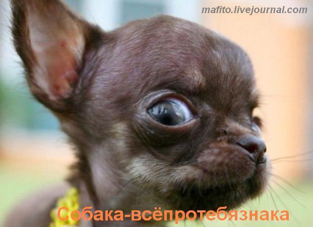 собака улыбака 1 (8)