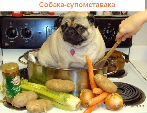 собака улыбака 1 (10)