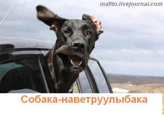 собака улыбака 1 (11)