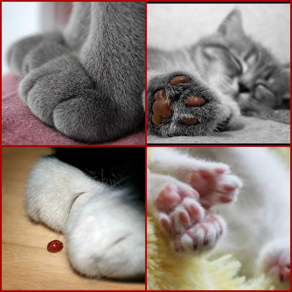 лапы котов полушечки