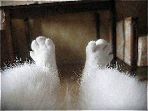 лапы котика (1)