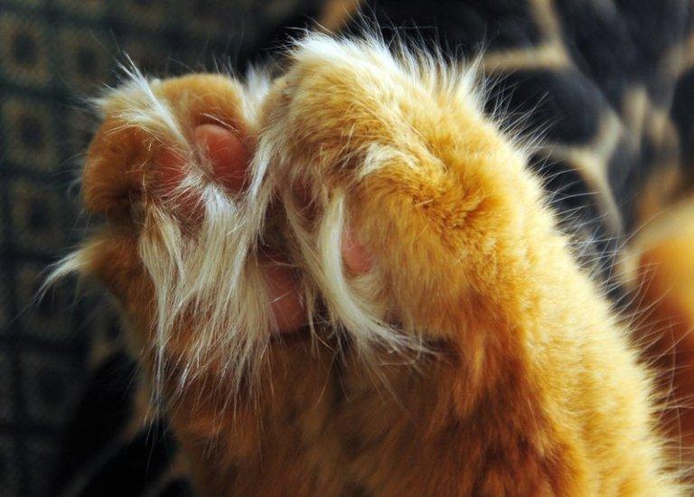 лапы котика (4)