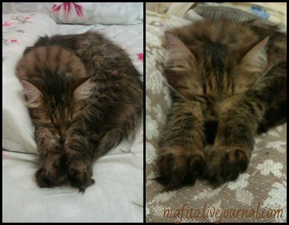 Бенни кот