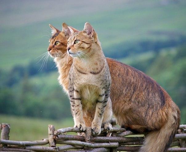 коте, коты, котики, кошки (1)