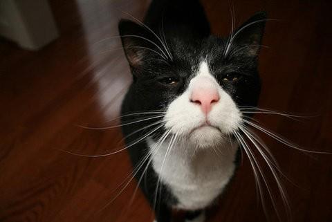 коте, коты, котики, кошки (2)