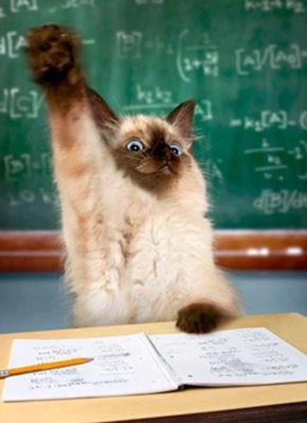 коте, коты, котики, кошки (4)