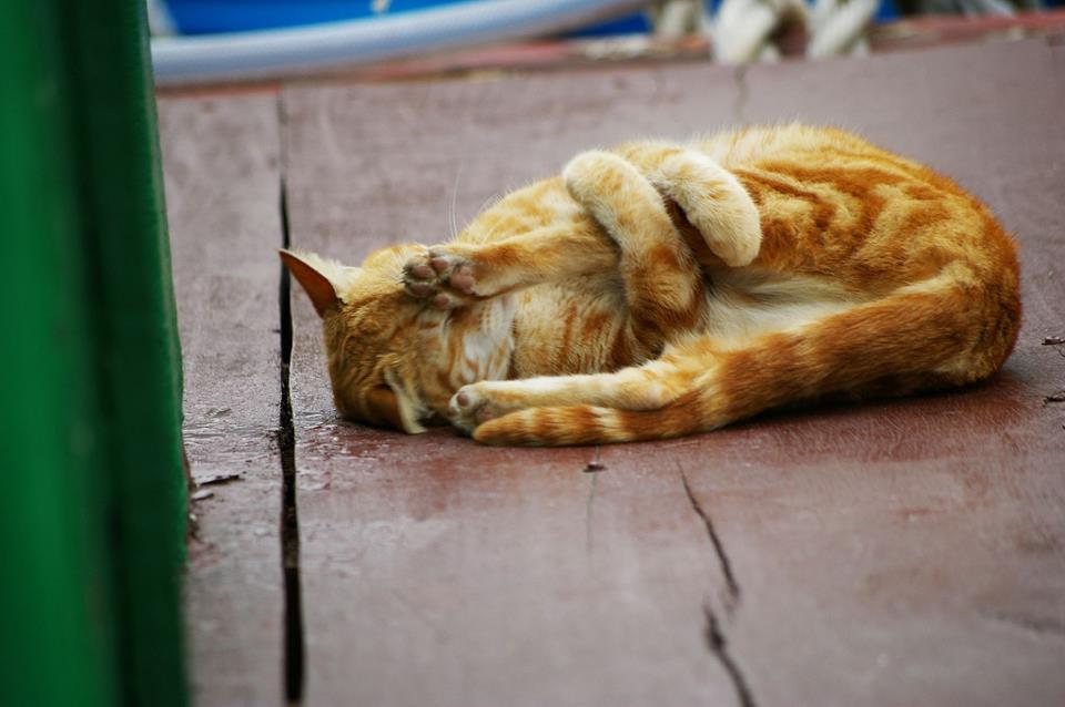 коте, коты, котики, кошки (7)