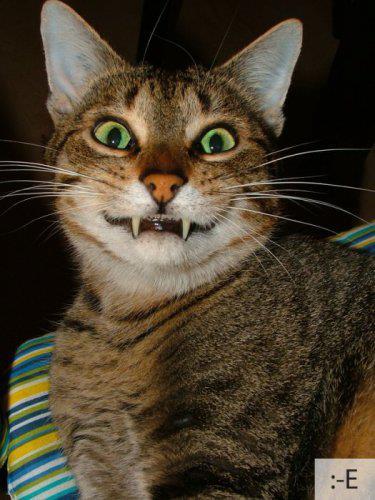 коте, коты, котики, кошки (8)