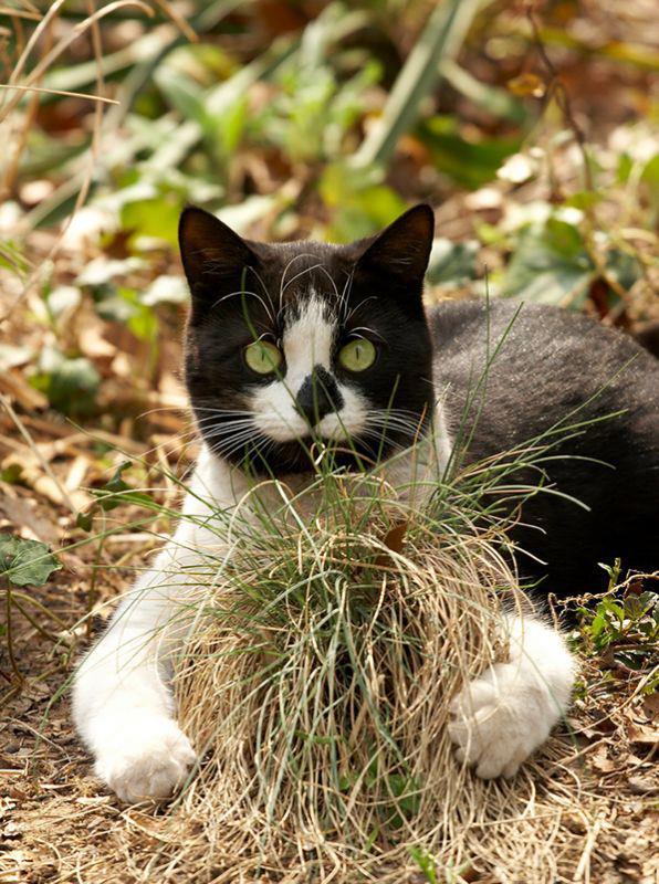 коте, коты, котики, кошки (10)