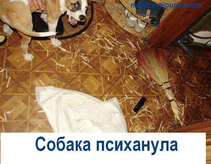 Собака-улыбака (2)