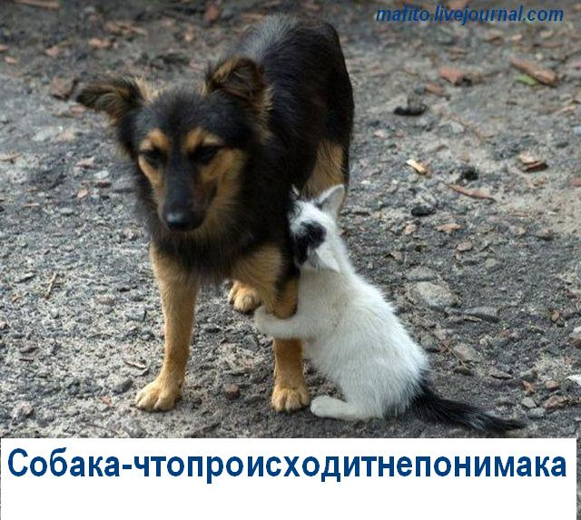Собака-улыбака (3)