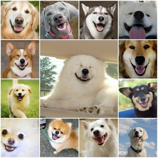 Собака-улыбака (4)