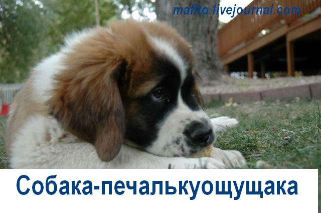 Собака-улыбака (5)