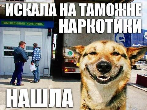 Собака-улыбака (7)