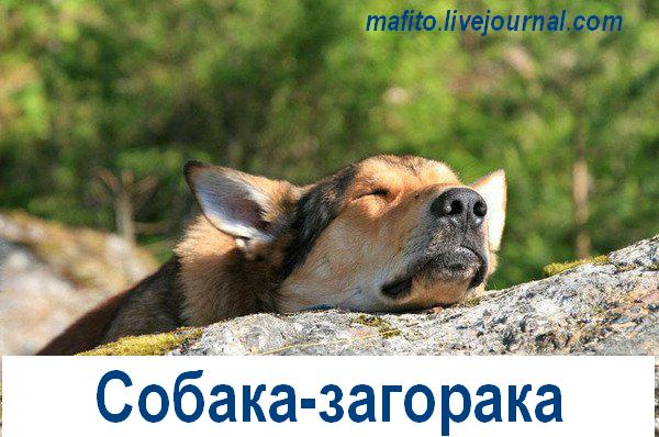 Собака-улыбака (8)