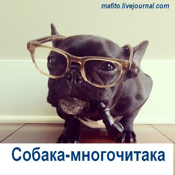 Собака-улыбака (9)