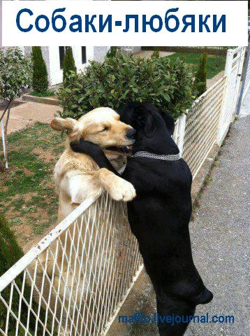 Собака-улыбака (10)