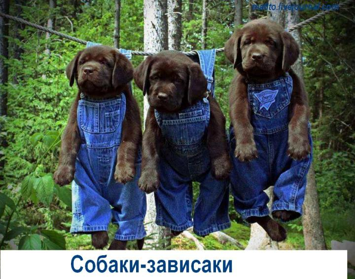 Собака-улыбака (11)