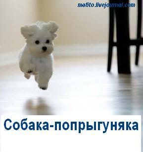 Собака-улыбака (13)