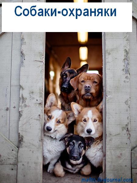 Собака-улыбака (12)